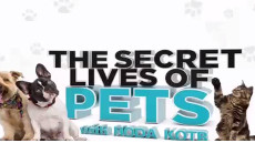 Secret-lives-of-pets